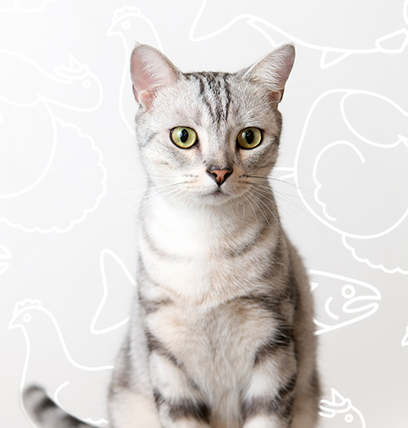 White and grey cat sitting in front of a designed background