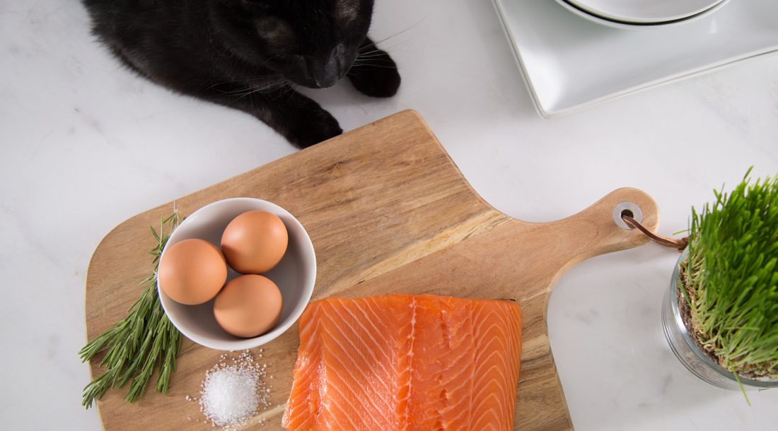 Overhead view of black cat looking at salmon filet, eggs, and herbs on wooden cutting board
